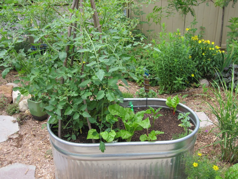 Veggies-in-containers41