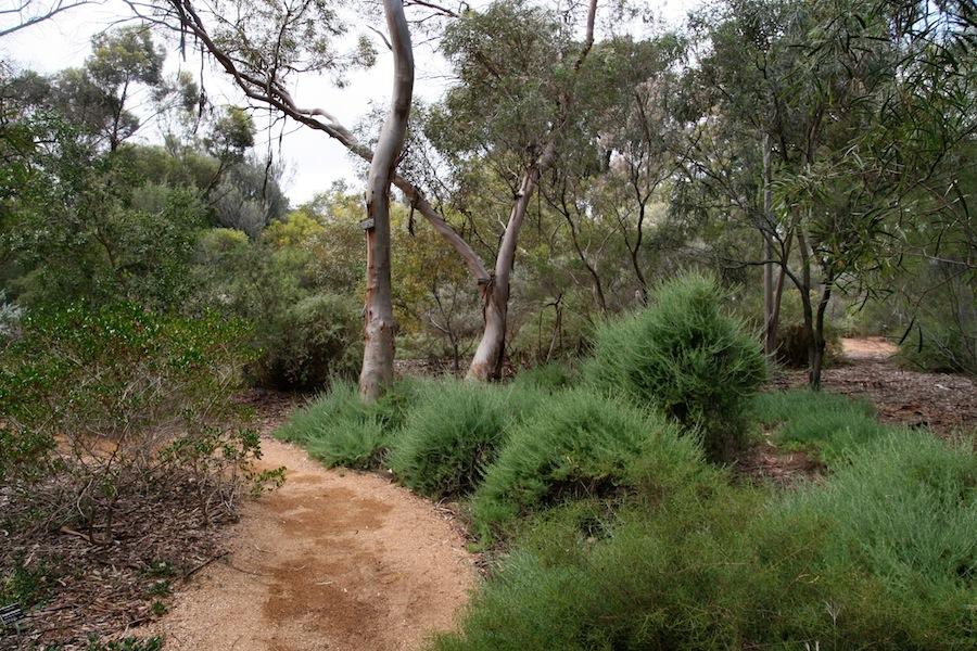adelaide botanic gardens2 - GardenDrum