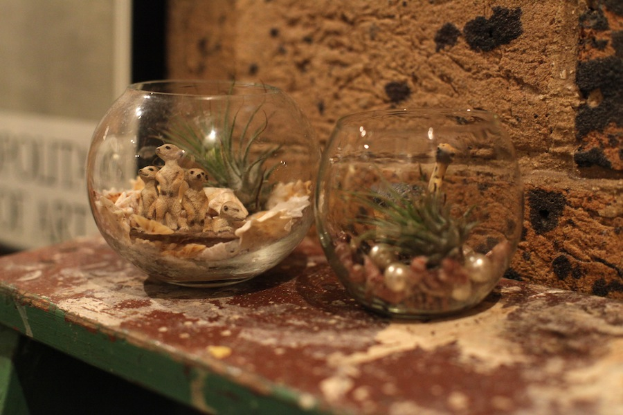 Adorable finished terrariums