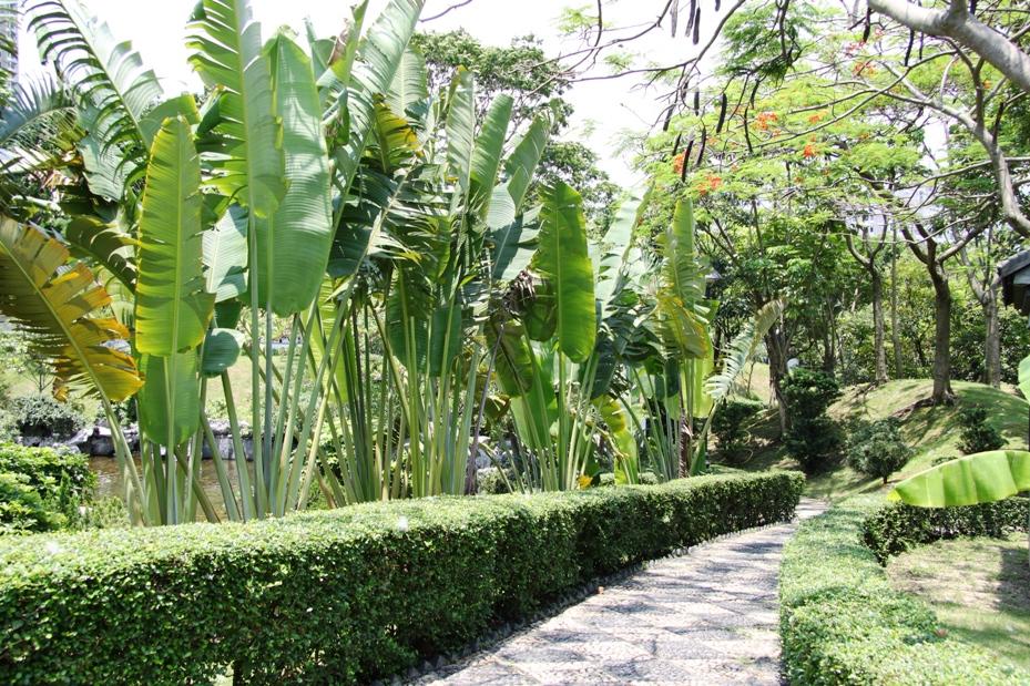 Banana Tree Path