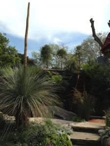 Grass trees in the Australian garden at Chelsea Flower Show 2013
