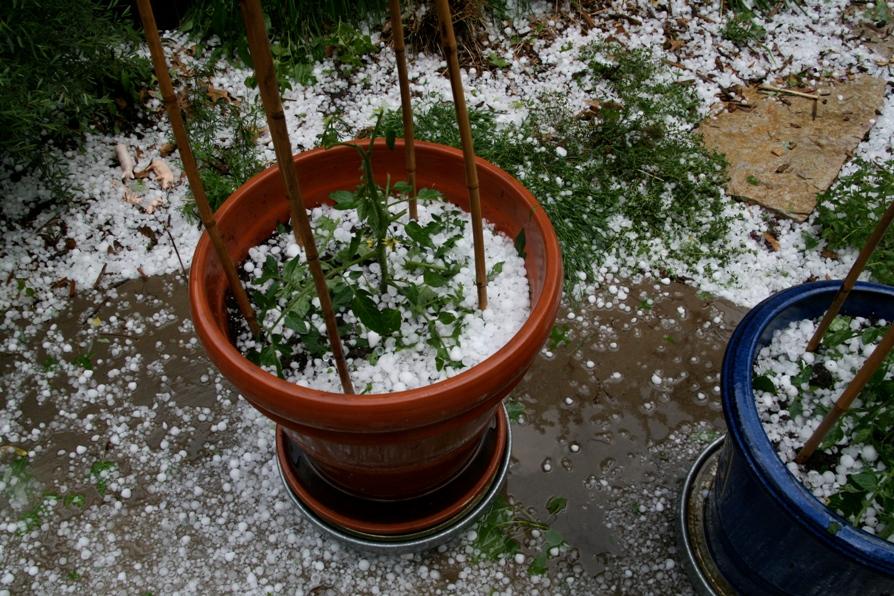 Hail in pots