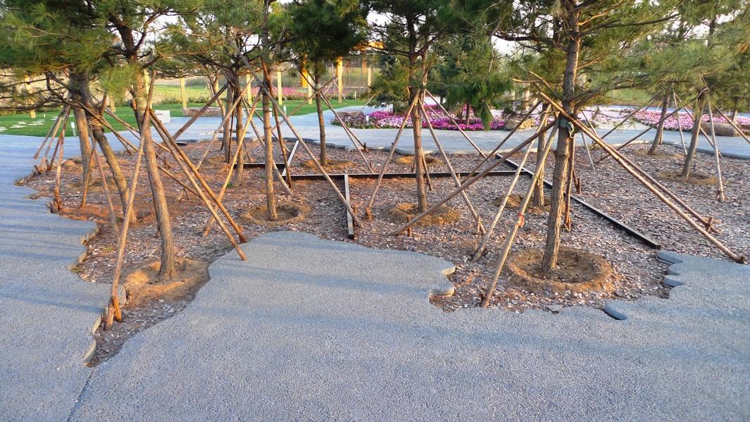 Island Forest Garden - Stone Pines
