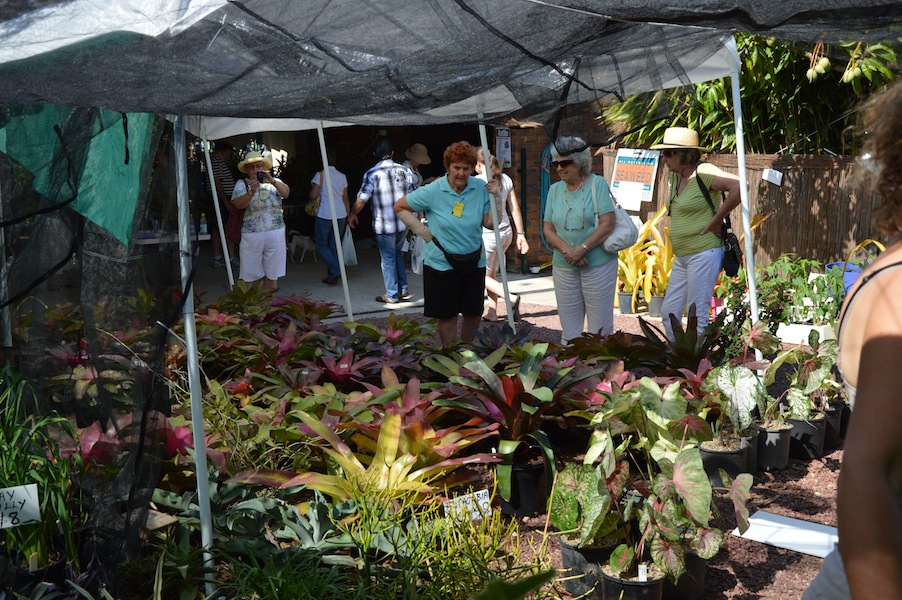 Judy has prepared lots of bromeliads for sale
