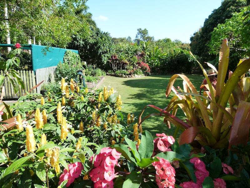 Our colourful subtropical garden