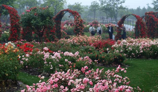 Shanghai-Chenshan-Botanical-Garden