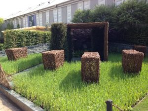 Using grass (barley) in garden design. Love it! Chelsea Flower Show 2013