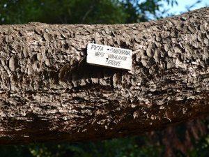 Wombat Hill Gardens 2