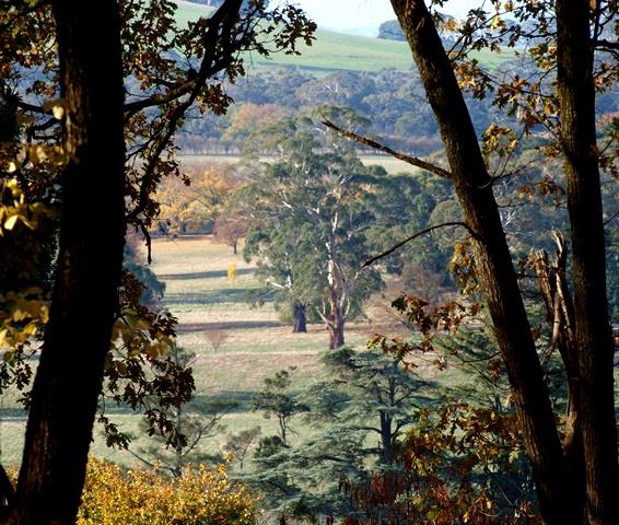 Wombat Hill Botanic Gardens 6