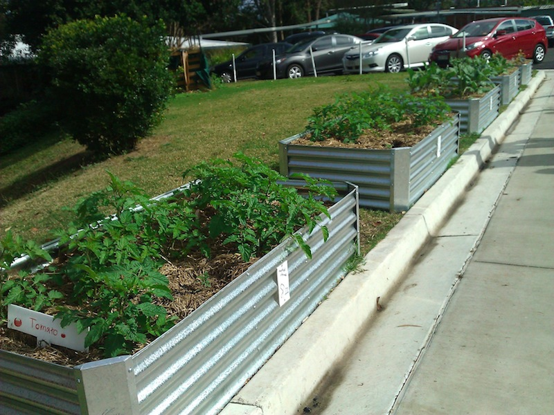 Vegetable beds line the walkways between classrooms at Mansfield State School
