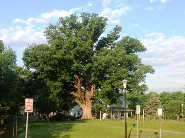 oaktree21