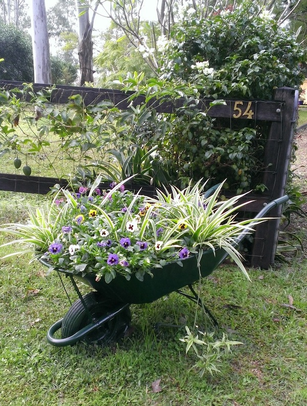 My welcome wheelbarrow filled with pansies