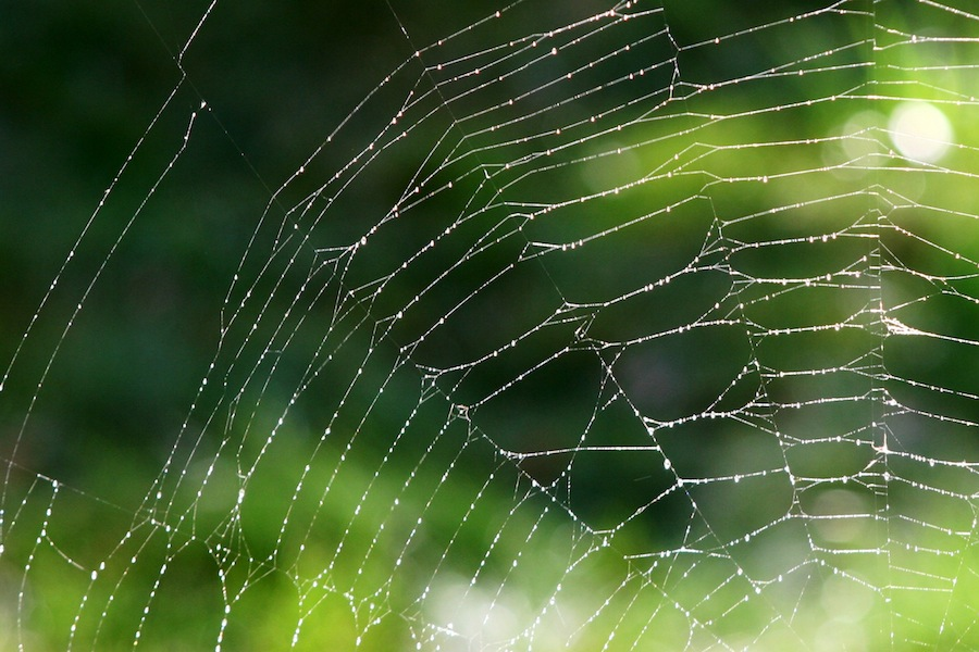 Imagine a clothesline like a spiderweb