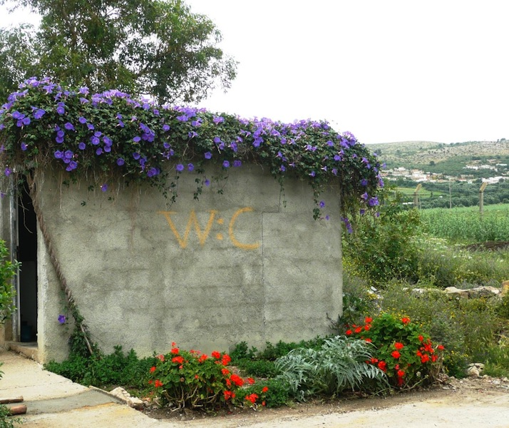 Even the WC at Volubilis is bedecked with flowers