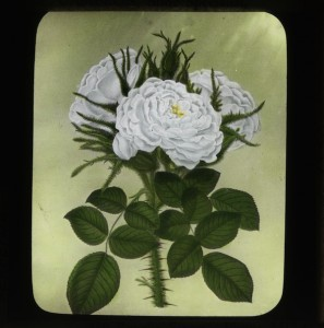 Glass Lantern Slide Burnley Collection