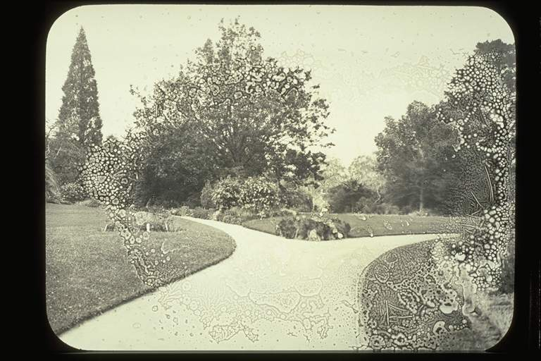 Glass Lantern Slide Looking toward Oak Lawn, Burnley Gardens