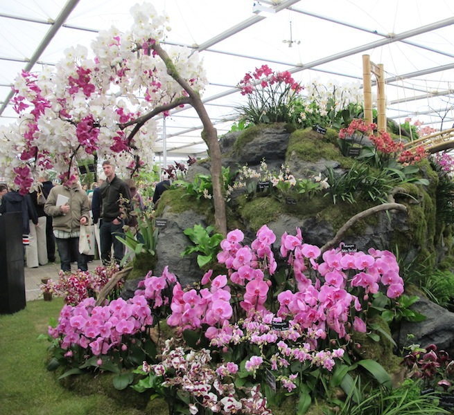 Orchid tree at the Chelsea Flower Show 2013