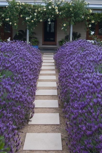 PGA Lavender Violet Lace