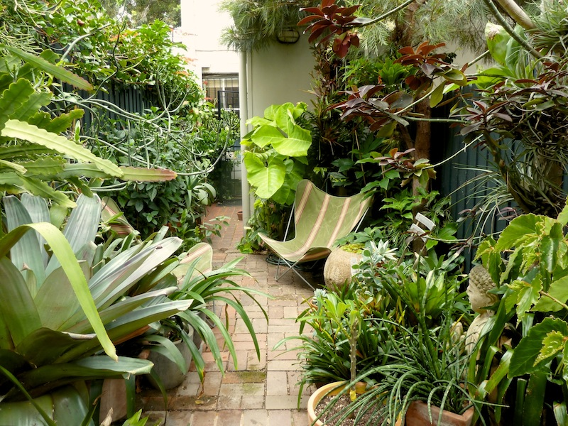 subtropical plants for sydney gardens gardendrum