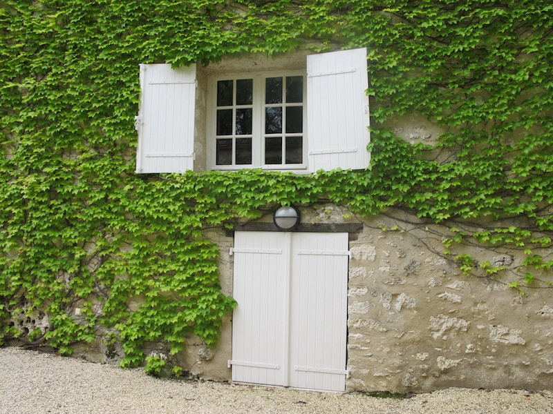 Shutters on pigeonnier with walls covered in Boston ivy