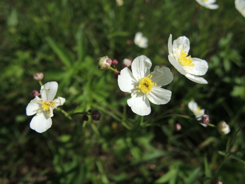 Wildflowers of the Dolomites3