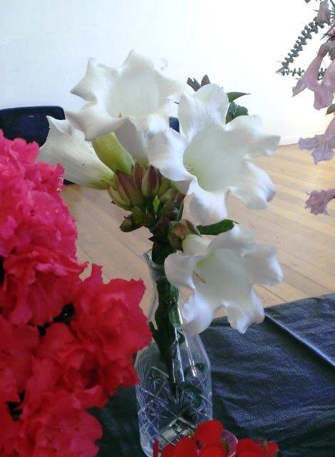 Beaumontia grandiflora at the garden club