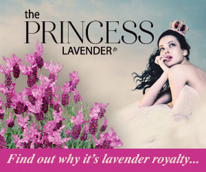 GD__L_princess_lav_Mrec