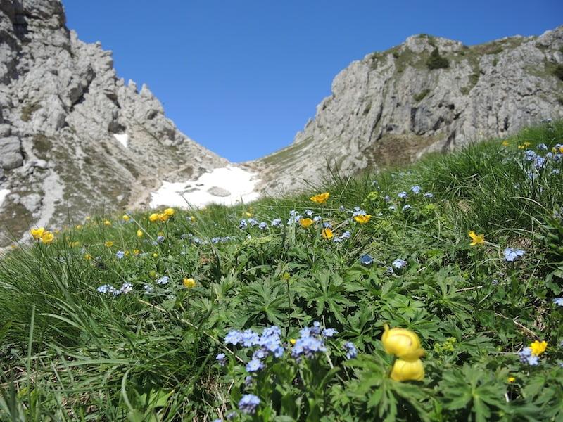 High alpine meadow Dolomites