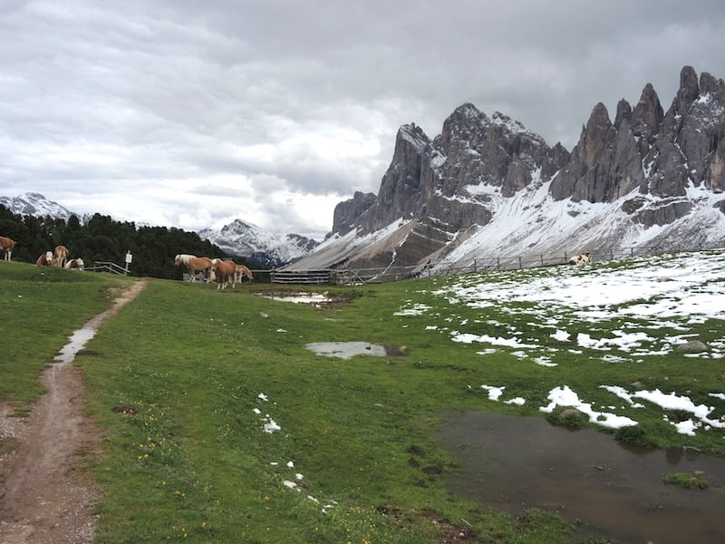 High alpine meadows Dolomites