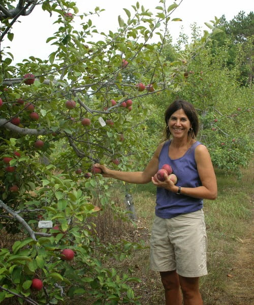 Apple picking at Old Frog Pond Farm