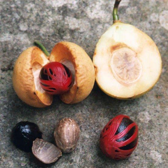 How to grow nutmeg and mace gardendrum - Noix de muscade cuisine ...