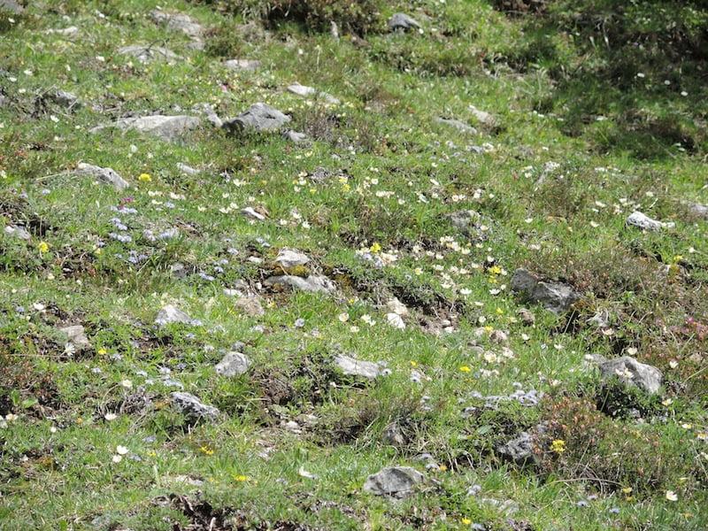 Rock zone Dolomites