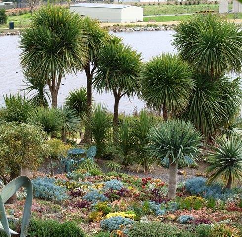 Succulents in Attila Kapitany garden Photo Tim Entwisle