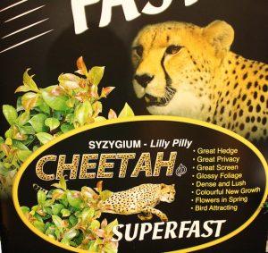 Syzygium 'Cheetah Superfast'