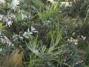 Native plants do their thing in The Last to Leave. Design Jim Fogarty