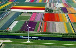 The tulip fields of Holland Photo Phileppa Doyle