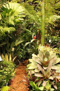 Tropical foliage display