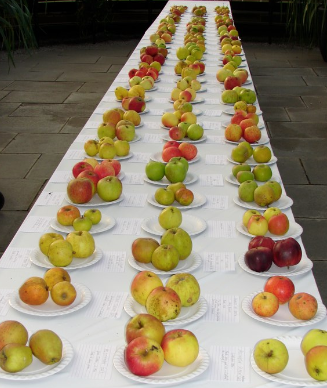 Varieties of Scottish apples from scottishorchards.com
