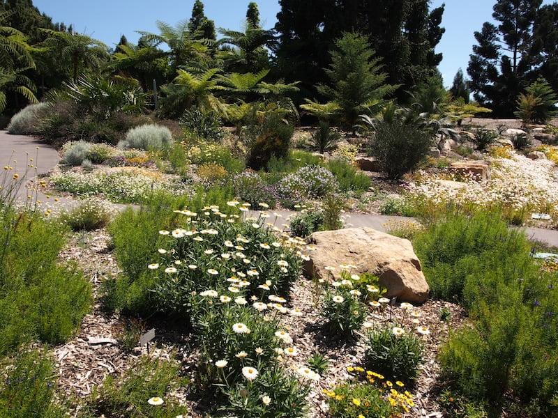 Spectacular Australian Garden at Mt Annan