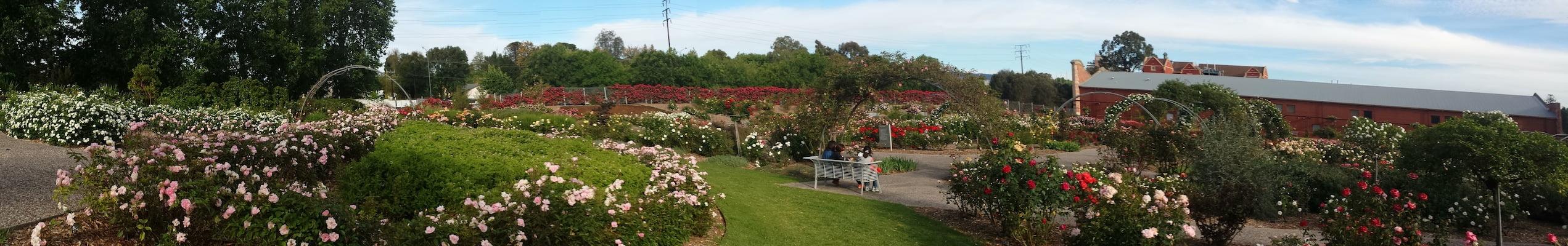 National Rose Garden in Adelaide Botanic Gardens