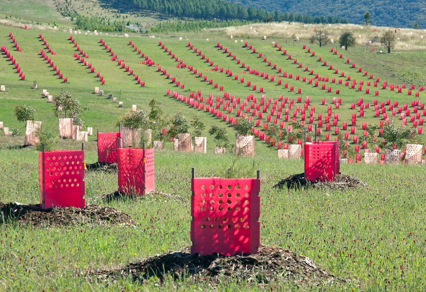 New plantings cloak the hills at Canberra's National Arboretum (Taylor Cullity Lethlean)