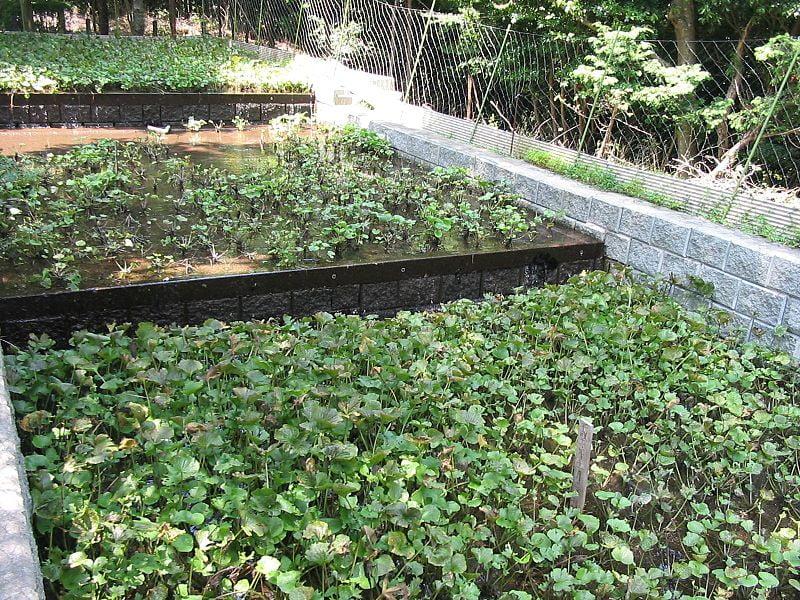 Wasabi_crop_2006-07-29