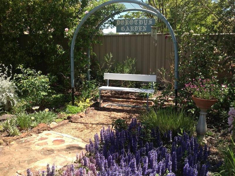Pretty purple Ajuga in Dorothy's garden