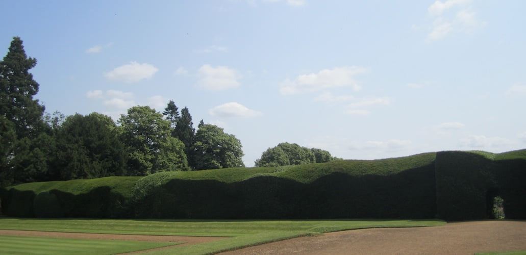 Massive, undulating clipped hedges