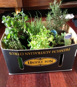 potted herbs from the markets