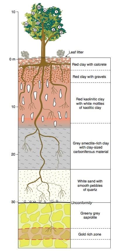 tree-gold-diagram