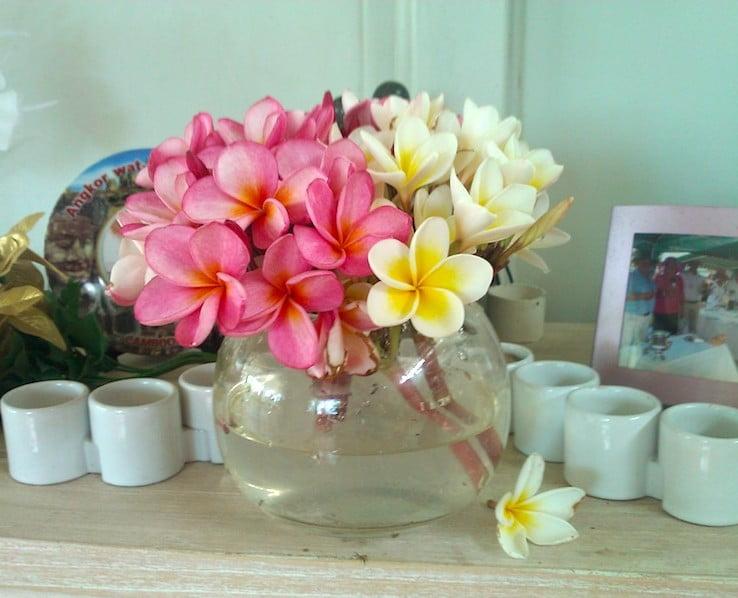 FRANGIPANI in Vase