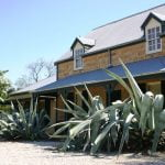 Glenmore House Agave franzosinii... make a bold statement. Leaves have been pruned off at base to control their size.