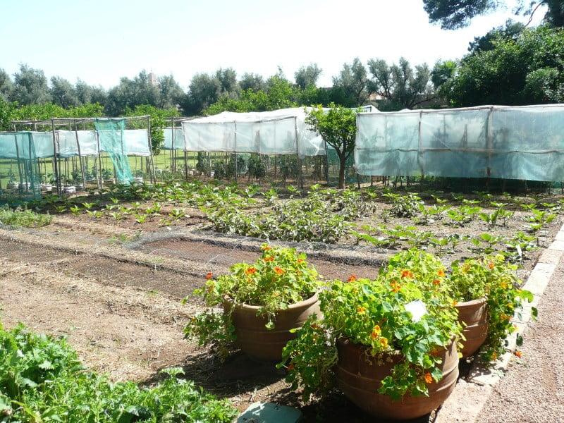 Hotel La Mamounia Productive garden