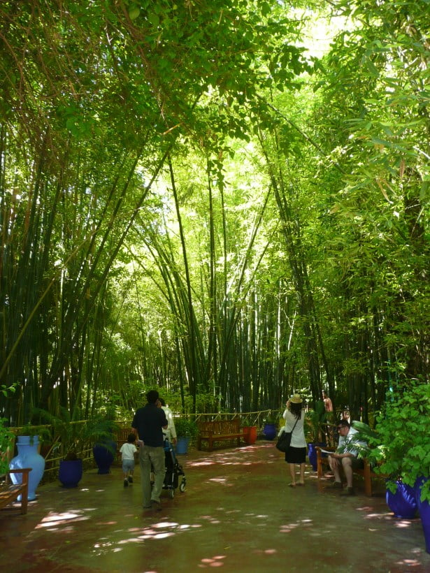 Jardin Majorelle Bamboo cathedral